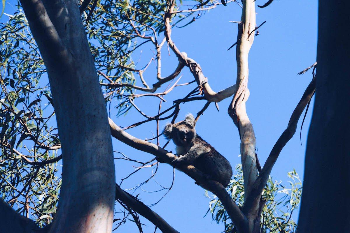 Roadtrip Du Nord au Sud de l'Australie: Explorers Way, Etape 4/4