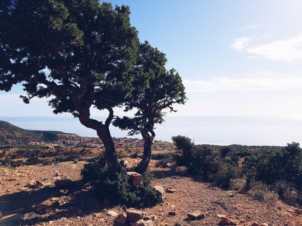 Aura Botanica: À la Découverte d'Agadir et de l'Huile d'Argan